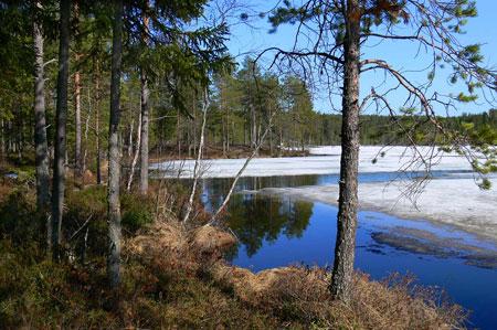 Фото иллюстрация к стихотворению Толстого А.К. 'Вот уж снег последний в поле тает'