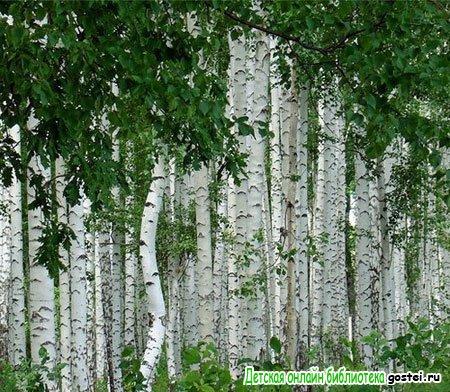 Фото иллюстрация к стихотворению Бунина 'Все темней и кудрявей березовый лес'