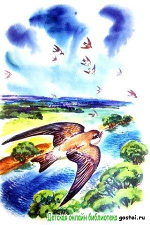 Иллюстрация к рассказу Астафьева В.П. 'Стрижонок Скрип'