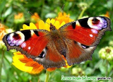 Фото иллюстрация к стихотворению Фета А.А. 'Бабочка'